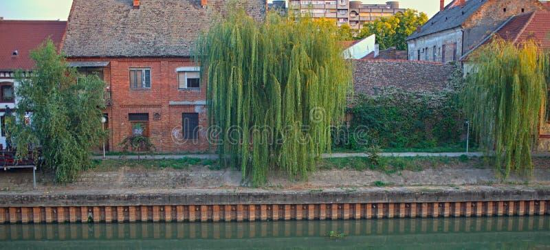Δέντρα ιτιών μπροστά από τα σπίτια σε μια όχθη ποταμού στοκ εικόνες