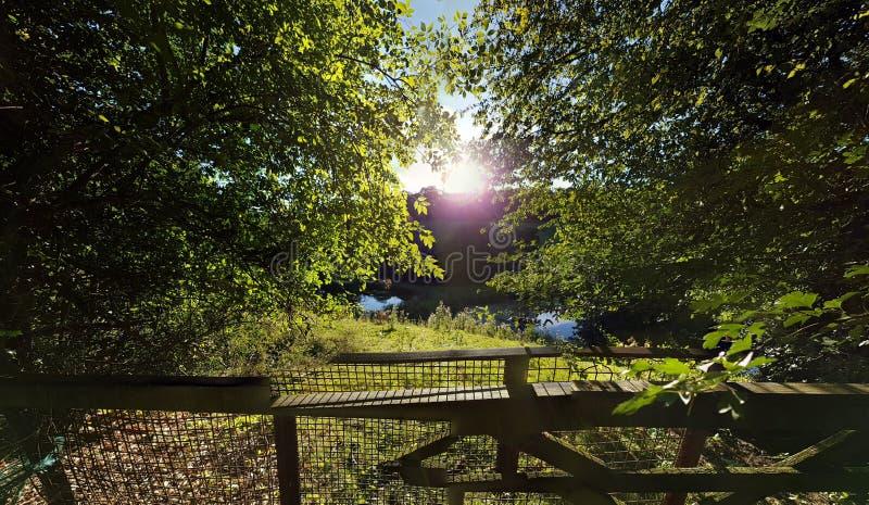Δέντρα και λίμνη θερινής ημέρας στοκ εικόνες