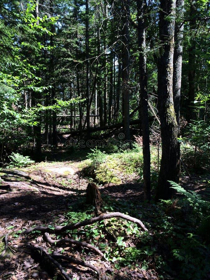 Δέντρα και ίχνη στοκ φωτογραφία