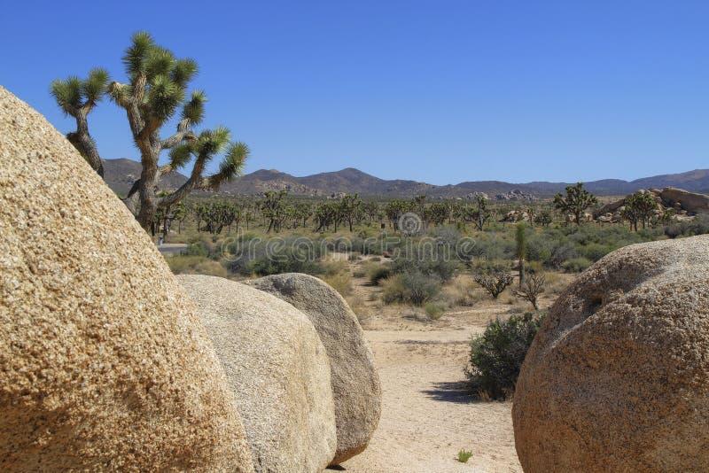Δέντρα και βουνά Joshua κατά την όψη λίθων στοκ φωτογραφίες με δικαίωμα ελεύθερης χρήσης