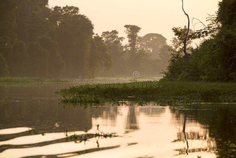 Δέντρα και ζούγκλα στον ποταμό Catatumbo, λίμνη Μαρακαΐμπο, Venezue στοκ εικόνες