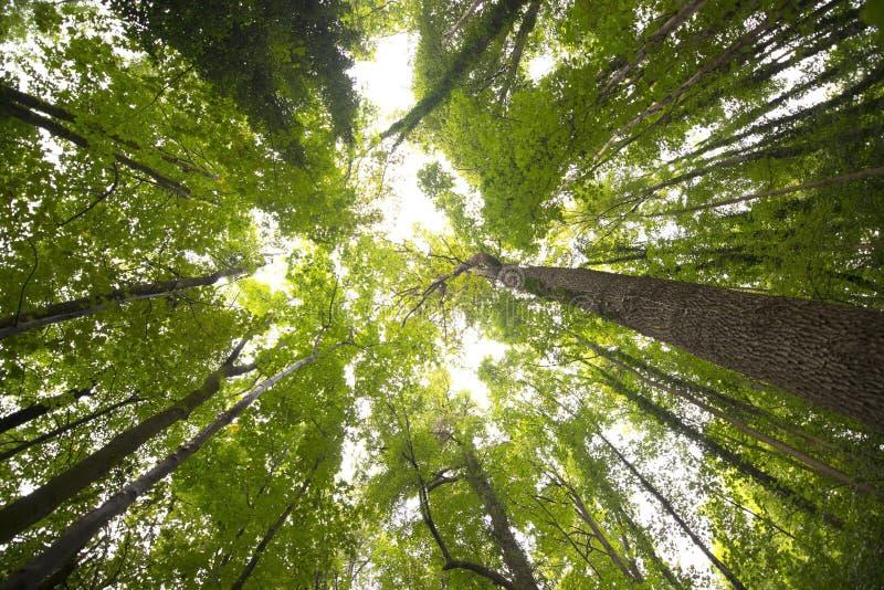 Δέντρα και κισσός στοκ φωτογραφίες με δικαίωμα ελεύθερης χρήσης
