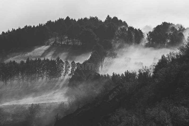 Δέντρα και ομίχλη στοκ εικόνες