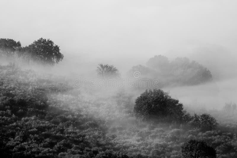 Δέντρα και ομίχλη στοκ φωτογραφία με δικαίωμα ελεύθερης χρήσης
