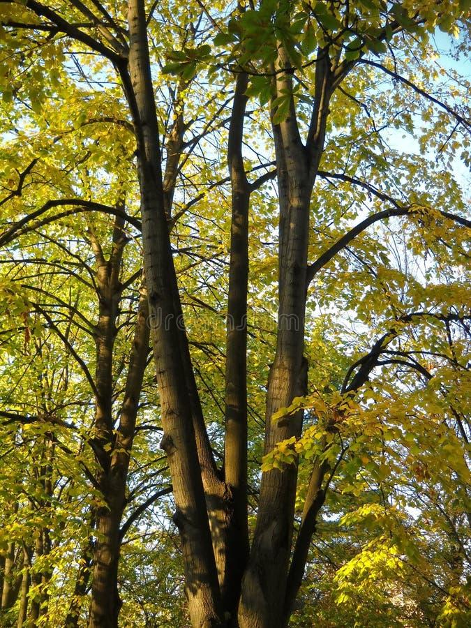 Δέντρα και ομπρέλα όπως τους κλάδους στοκ φωτογραφίες με δικαίωμα ελεύθερης χρήσης
