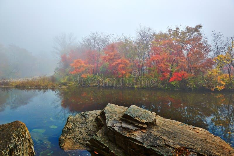 Δέντρα και πέτρα φθινοπώρου στην υδρονέφωση στοκ φωτογραφία