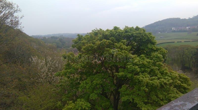 Δέντρα και πεδία στοκ εικόνα με δικαίωμα ελεύθερης χρήσης