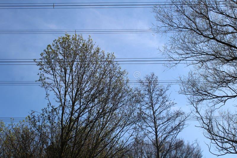 Δέντρα και ρευματοδότες ενάντια στο μπλε skye στοκ εικόνα με δικαίωμα ελεύθερης χρήσης