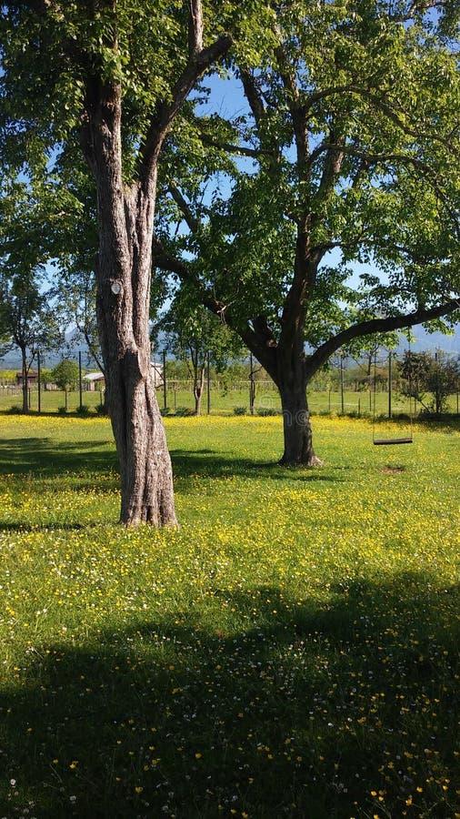 Δέντρα και ταλάντευση στοκ εικόνα