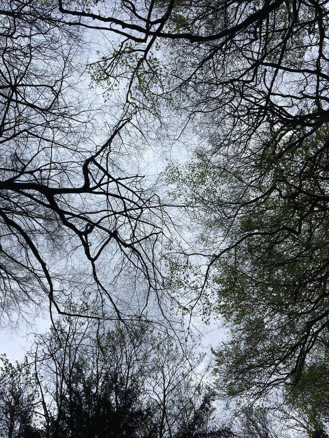 Δέντρα και φυσικός στοκ φωτογραφίες