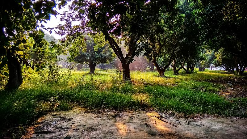 Δέντρα και χρυσό φως στοκ φωτογραφία με δικαίωμα ελεύθερης χρήσης