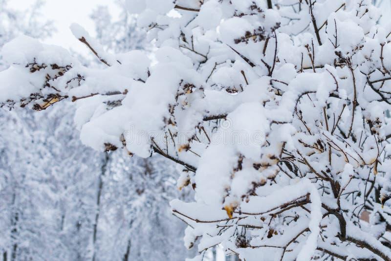 Δέντρα καλυμμένα με χιόνι χιονισμένος χειμώνας στοκ φωτογραφία