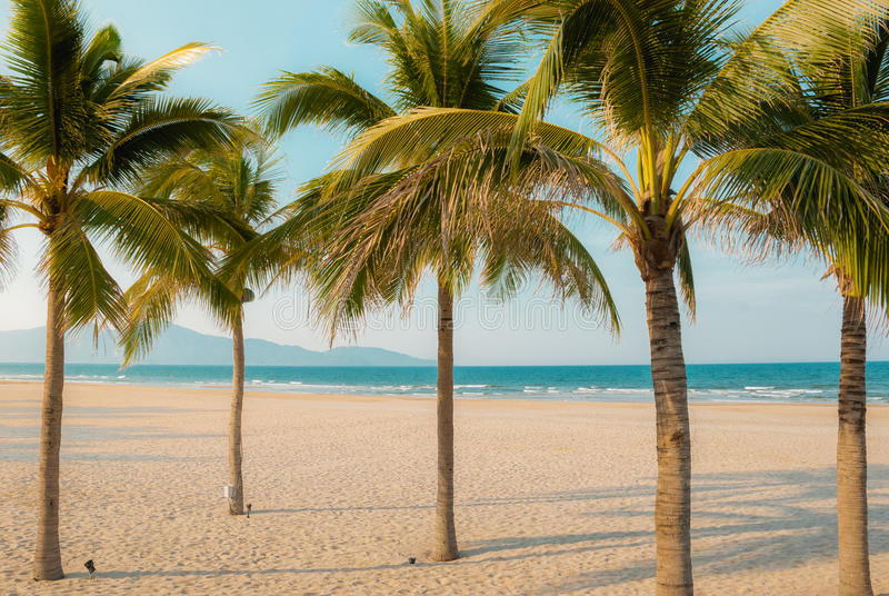 Δέντρα καρύδων στην παραλία και τη θάλασσα στοκ εικόνες
