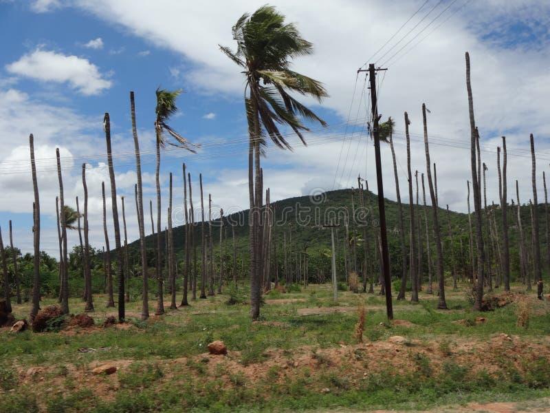 Δέντρα καρύδων στοκ εικόνες με δικαίωμα ελεύθερης χρήσης