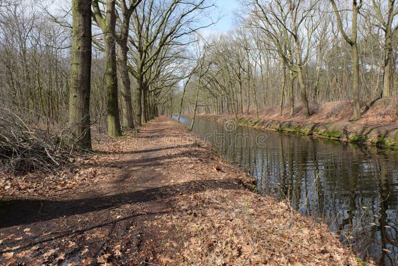 Δέντρα κατά μήκος ενός καναλιού στην επαρχία του Βελγίου στοκ εικόνα με δικαίωμα ελεύθερης χρήσης
