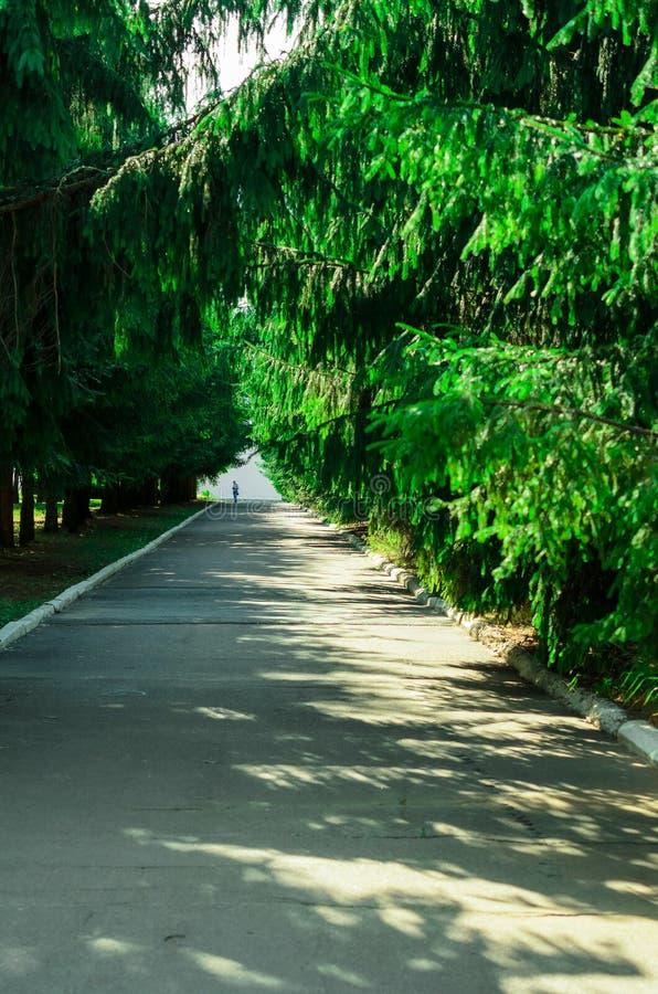 Δέντρα κατά μήκος της σκιερής αλέας στο θερινό πάρκο στοκ εικόνες