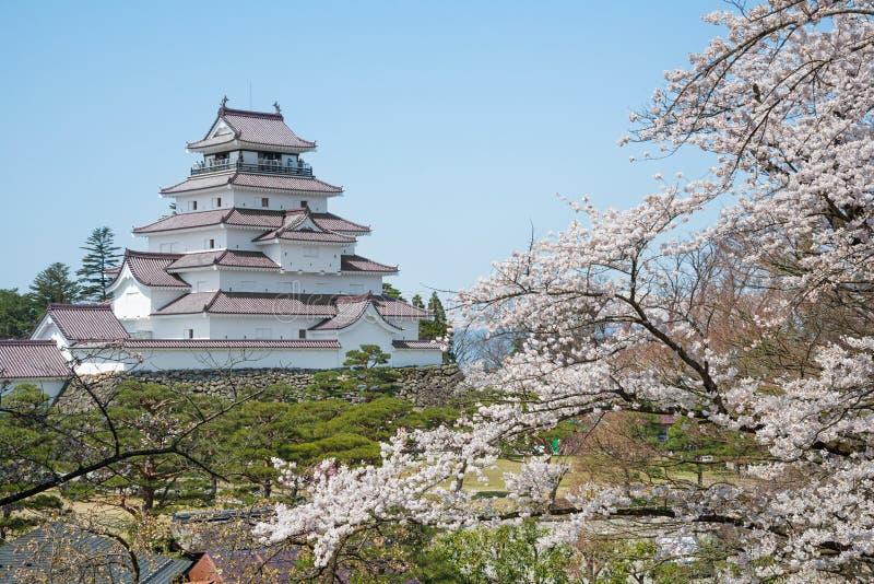 Δέντρα κεράσι-ανθών στο πάρκο κάστρων Tsuruga στοκ φωτογραφίες