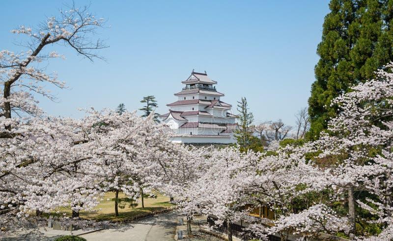 Δέντρα κεράσι-ανθών στο πάρκο κάστρων Tsuruga στοκ εικόνα με δικαίωμα ελεύθερης χρήσης