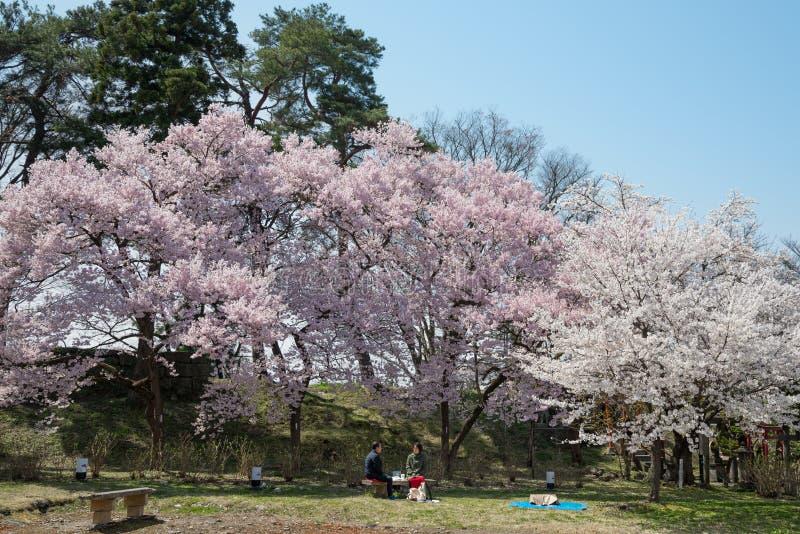 Δέντρα κεράσι-ανθών στο πάρκο κάστρων Tsuruga στοκ φωτογραφίες με δικαίωμα ελεύθερης χρήσης