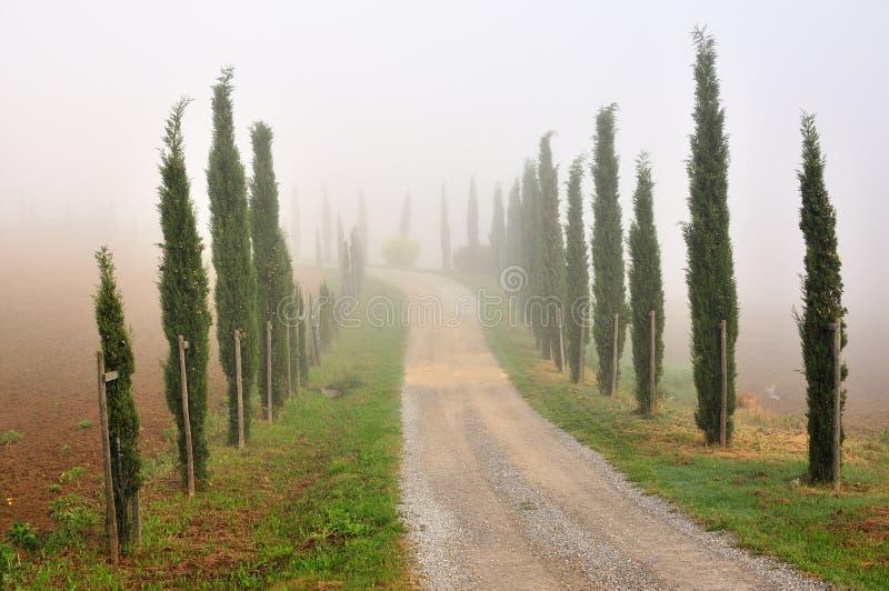 Δέντρα κυπαρισσιών στην υδρονέφωση πρωινού στοκ εικόνες με δικαίωμα ελεύθερης χρήσης
