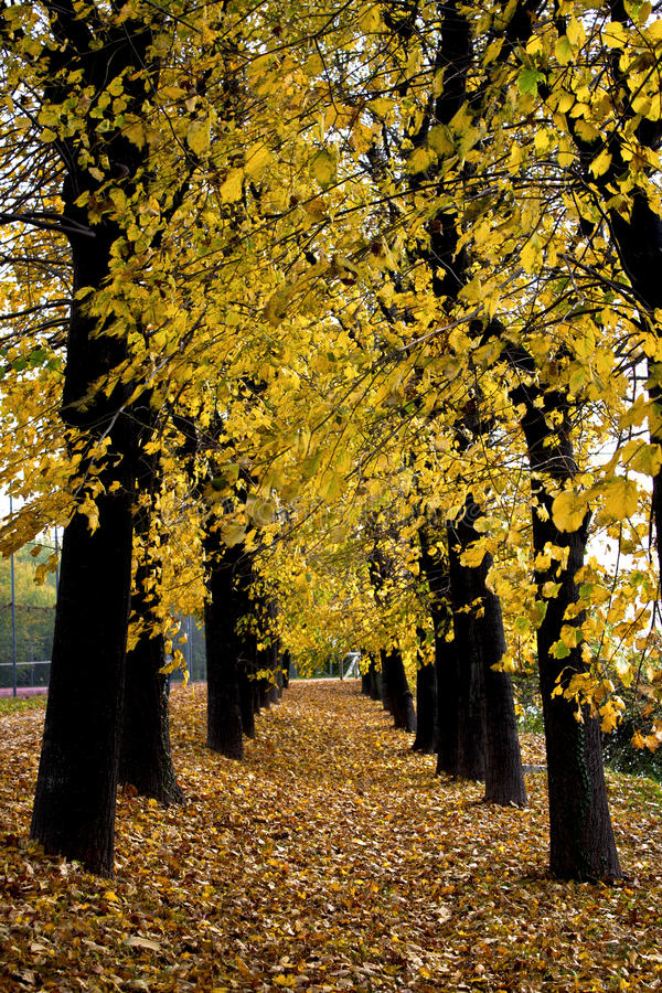 δέντρα λεωφόρων στοκ εικόνες