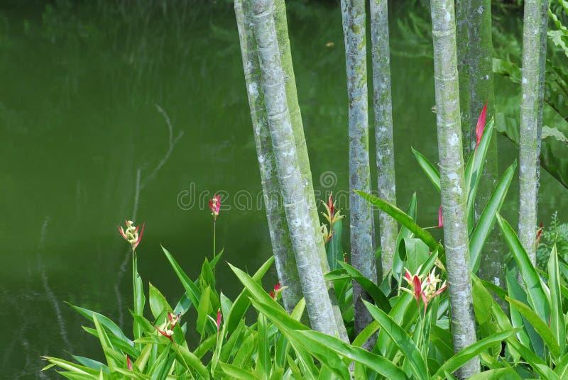 δέντρα λιμνών στοκ εικόνα με δικαίωμα ελεύθερης χρήσης
