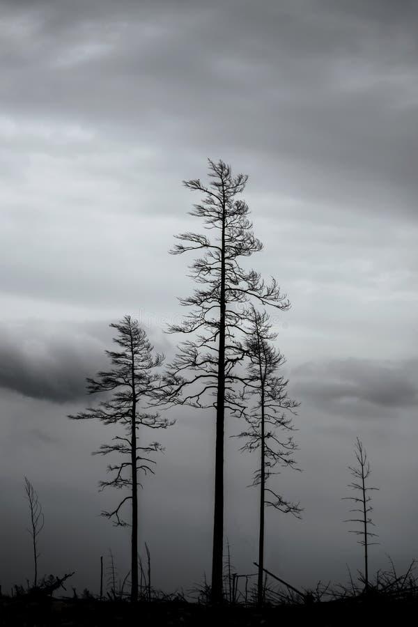 Δέντρα μετά από τη δασική πυρκαγιά στοκ φωτογραφία με δικαίωμα ελεύθερης χρήσης