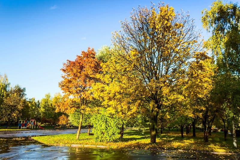 Δέντρα με τα ζωηρόχρωμα φύλλα στο πάρκο φθινοπώρου στοκ φωτογραφία