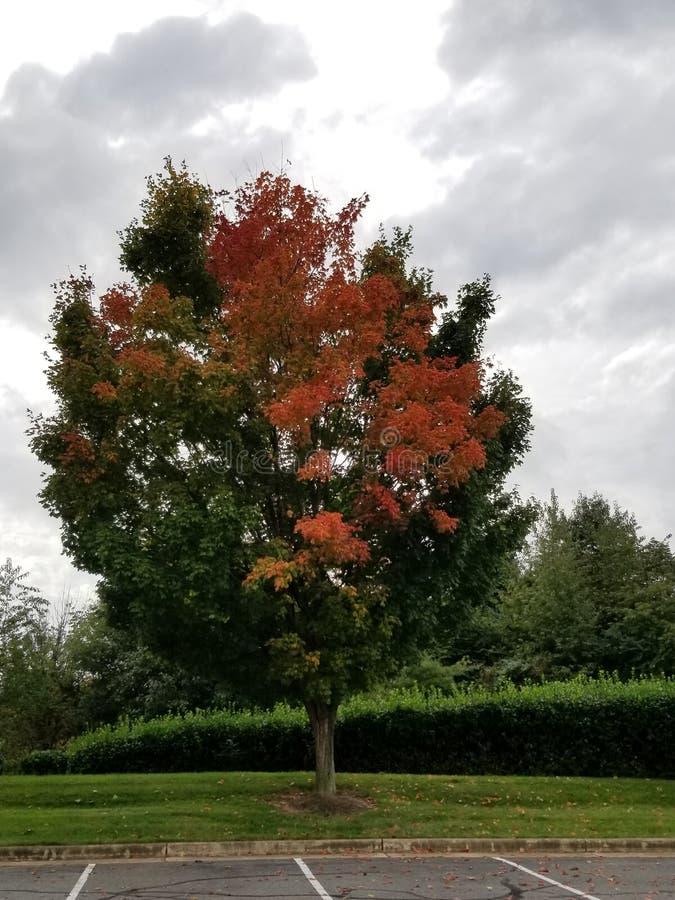 Δέντρα με τα πορτοκαλιά χρώματα στοκ φωτογραφία με δικαίωμα ελεύθερης χρήσης