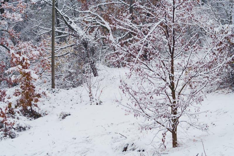 Δέντρα με τα φύλλα και το χιόνι στοκ φωτογραφία