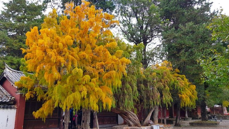 Δέντρα με τα χαρακτηριστικά χρώματα φθινοπώρου, Κίνα στοκ φωτογραφία με δικαίωμα ελεύθερης χρήσης