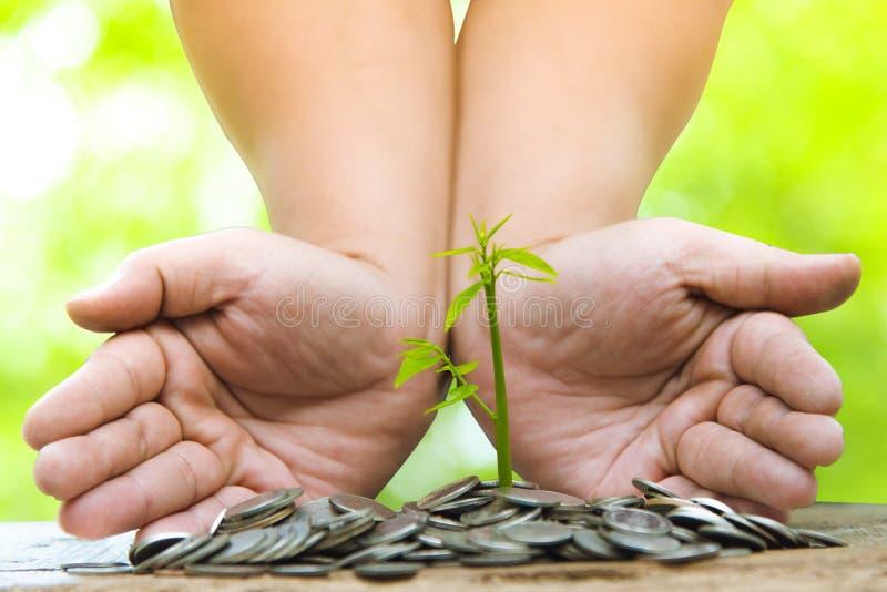 Δέντρα με τα χρήματα, που κερδίζουν χρήματα και που αυξάνονται τα χέρια Αυξανόμενη επιχειρησιακή αύξηση και οικονομική καλλιέργει στοκ εικόνες