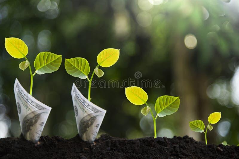 Δέντρα με τα χρήματα, την αποταμίευση και τα χρήματα Χέρια παιδιών ` s που φυτεύονται στο μαύρο χώμα στοκ φωτογραφία με δικαίωμα ελεύθερης χρήσης