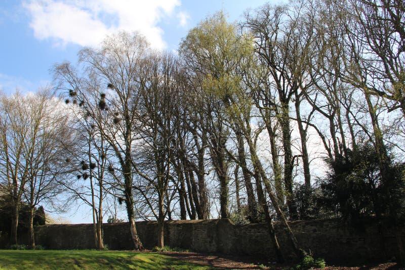 Δέντρα με τις φωλιές πουλιών στοκ εικόνες