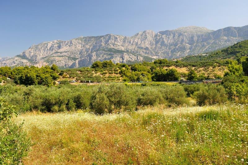 Δέντρα με το υψηλό κροατικό βουνό Biokovo στοκ εικόνες