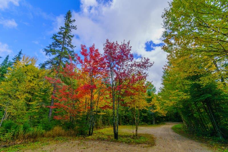 Δέντρα με χρώματα από φυλλώματα πτώσης στο Εθνικό Πάρκο Mont Tremblant στοκ εικόνες