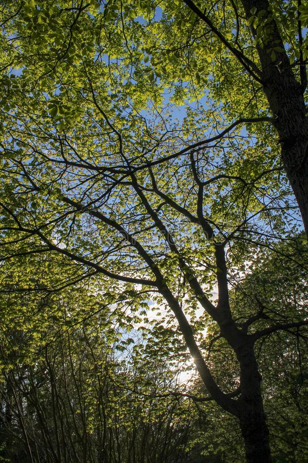 Δέντρα μια σαφή ημέρα στοκ φωτογραφία με δικαίωμα ελεύθερης χρήσης