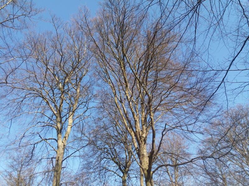 Δέντρα μια όμορφη ηλιόλουστη ημέρα στοκ φωτογραφία