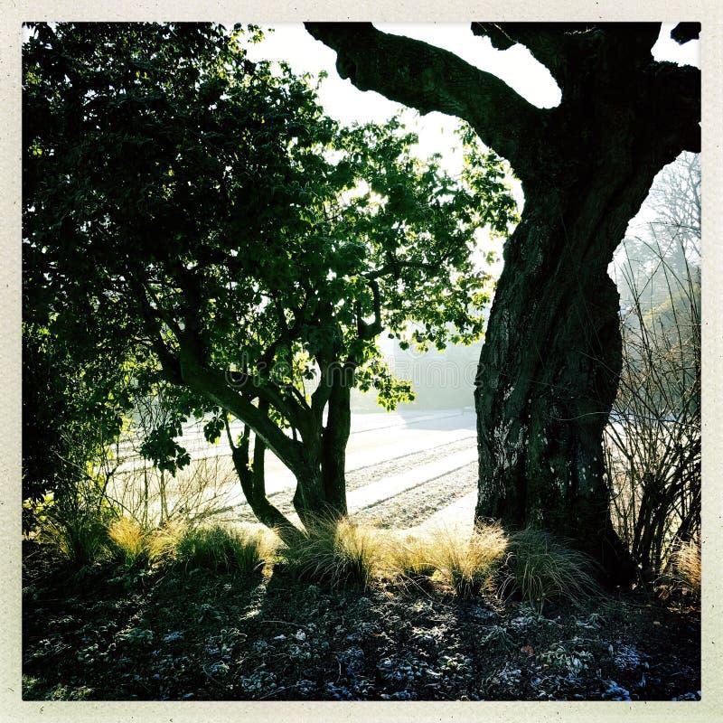 Δέντρα νωρίς ένα πρωί στοκ φωτογραφία με δικαίωμα ελεύθερης χρήσης