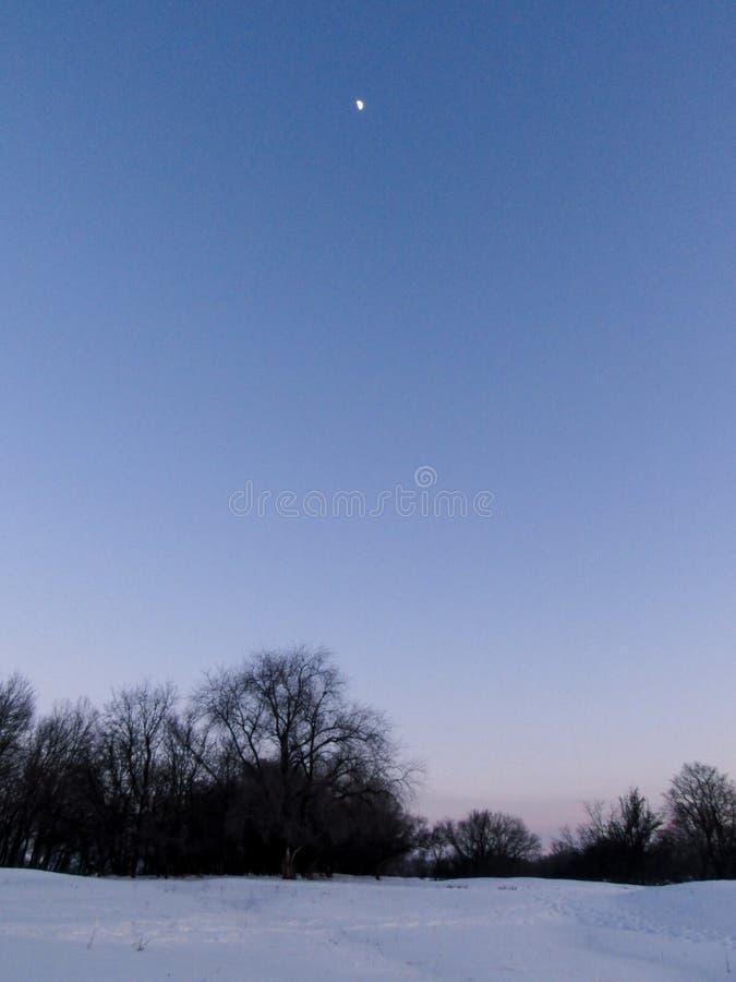 δέντρα νύχτας φεγγαριών αποκριών στοκ εικόνες με δικαίωμα ελεύθερης χρήσης