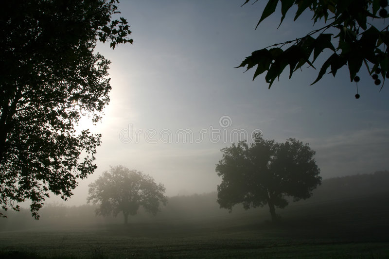 Download δέντρα ομίχλης στοκ εικόνες. εικόνα από φύλλο, πτώση, λόφος - 1526526