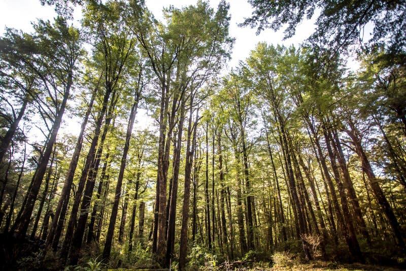 Δέντρα οξιών στοκ εικόνα με δικαίωμα ελεύθερης χρήσης