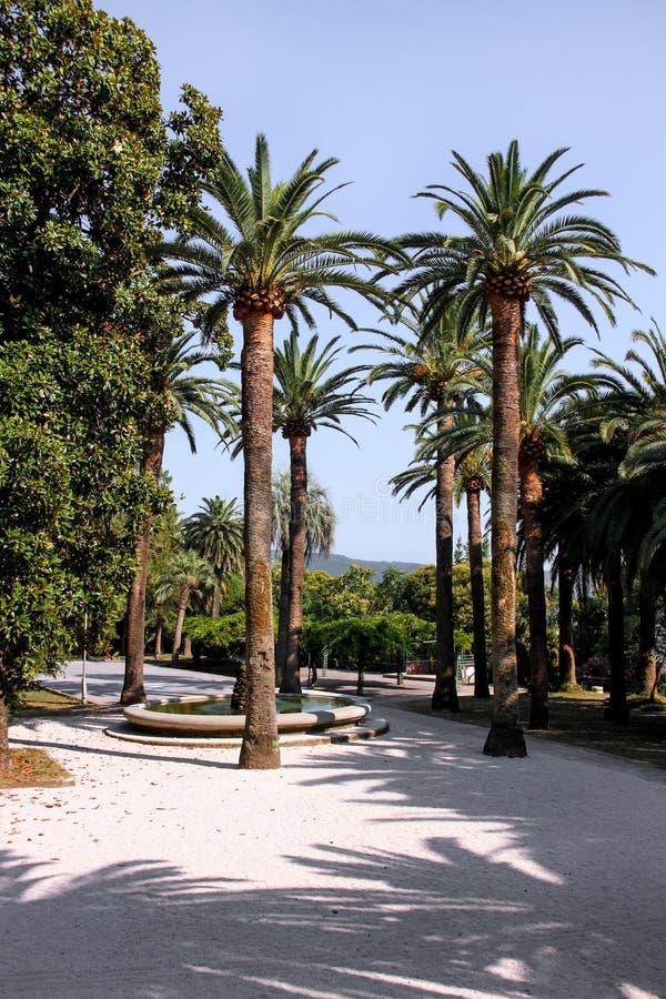 δέντρα πάρκων φοινικών στοκ φωτογραφίες