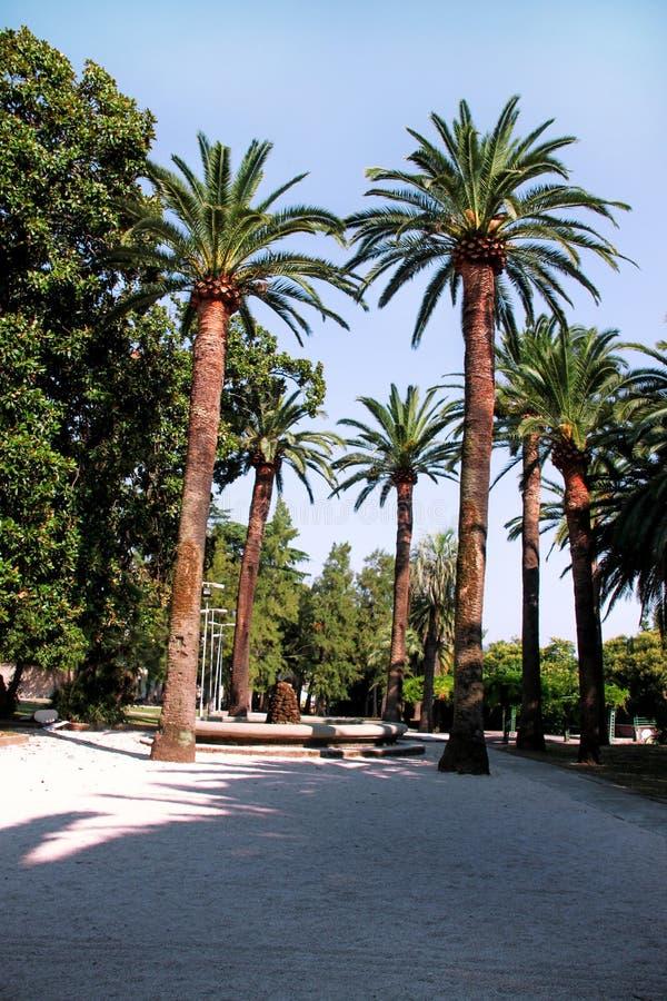 δέντρα πάρκων φοινικών στοκ φωτογραφία με δικαίωμα ελεύθερης χρήσης