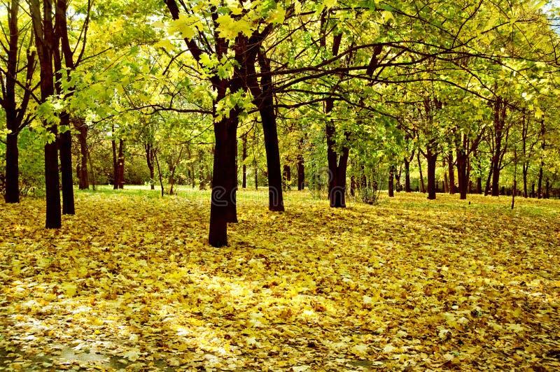 δέντρα πάρκων στοκ εικόνα