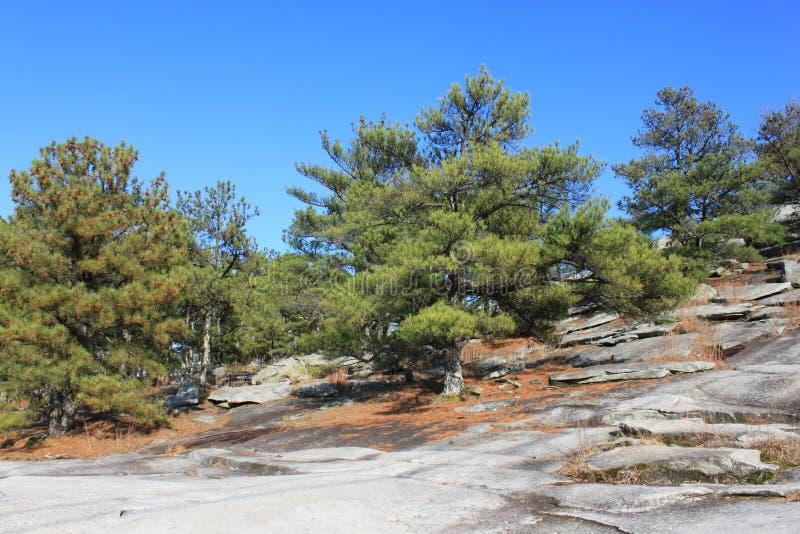 δέντρα πετρών βουνών της Γε& στοκ φωτογραφία με δικαίωμα ελεύθερης χρήσης