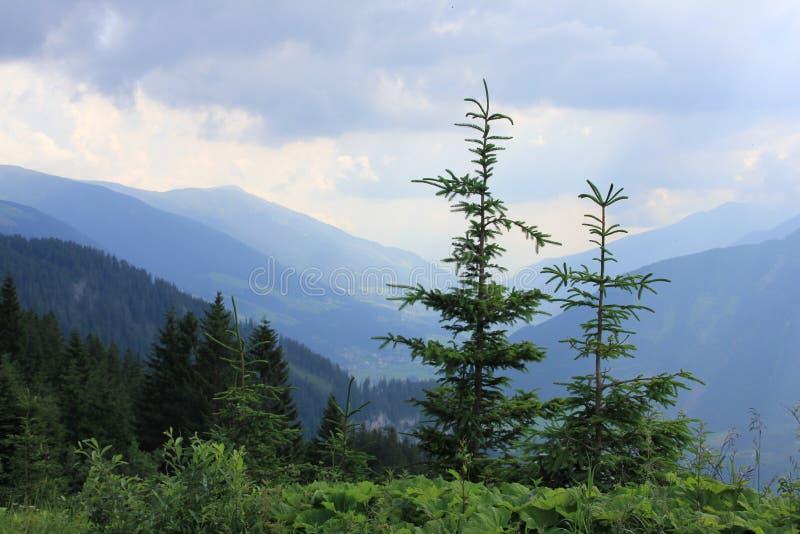 Δέντρα πεύκων και μια άποψη στα βουνά στην Αυστρία στοκ φωτογραφία με δικαίωμα ελεύθερης χρήσης