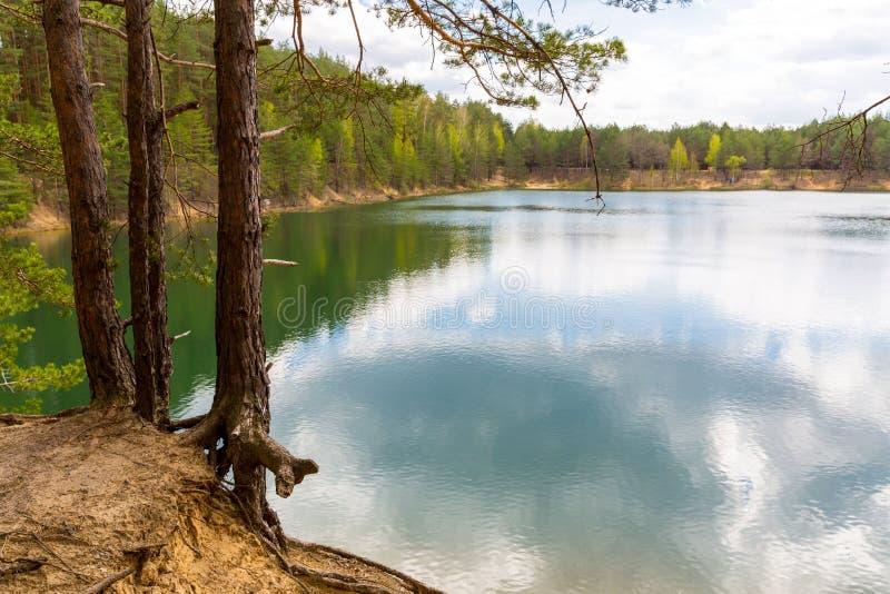 Δέντρα πεύκων κοντά στη λίμνη στοκ φωτογραφίες