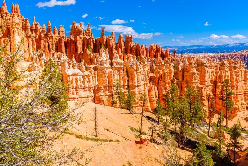 Δέντρα πεύκων που αυξάνονται στη βασική γραμμή φαραγγιών του Bryce στοκ εικόνα με δικαίωμα ελεύθερης χρήσης