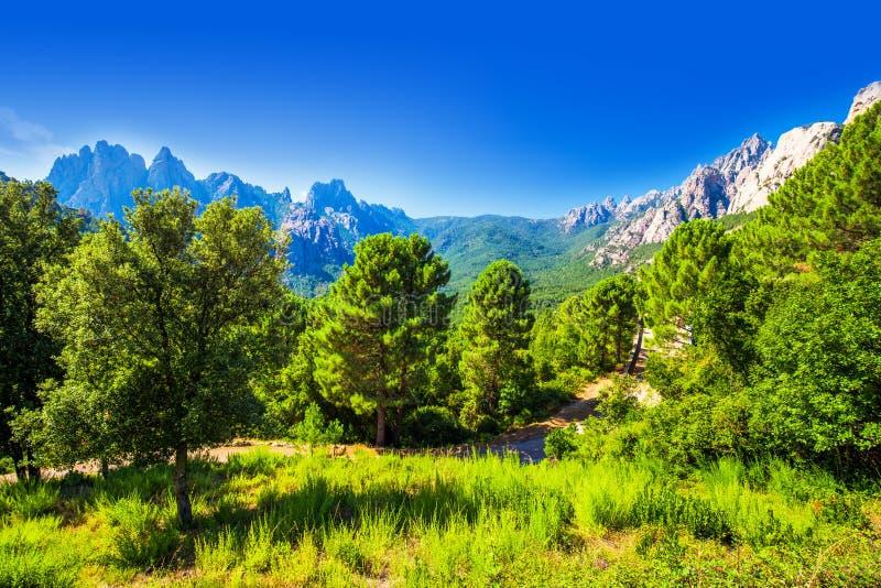 Δέντρα πεύκων στα βουνά του συνταγματάρχη de Bavella κοντά στην πόλη Zonza, Κορσική στοκ εικόνες με δικαίωμα ελεύθερης χρήσης